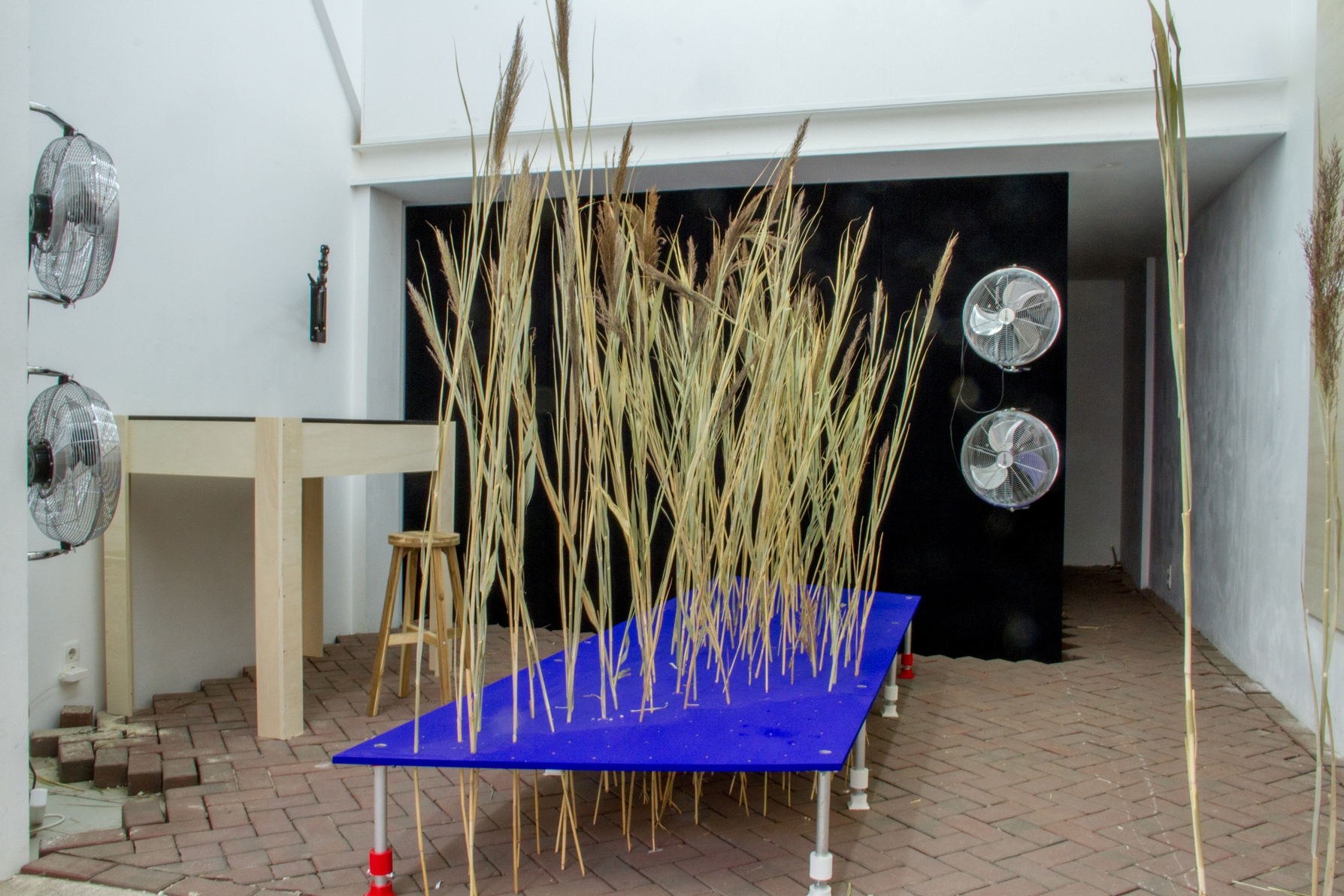 Installation stages 1–3: Reeds. Photo: Rib