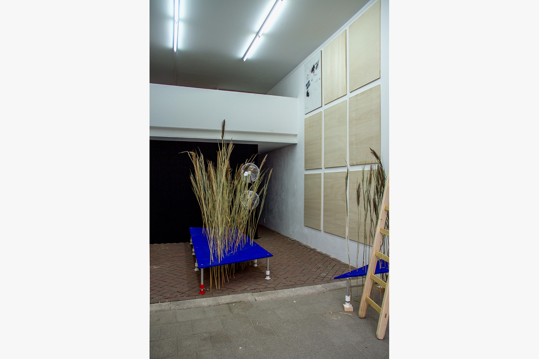 Installation stages 1–3: Reeds from the river Rupel. Photo: Rib